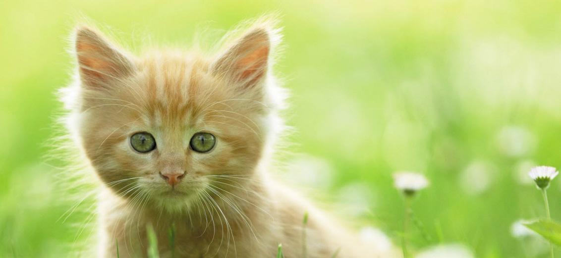 cute_kitten-1440x900