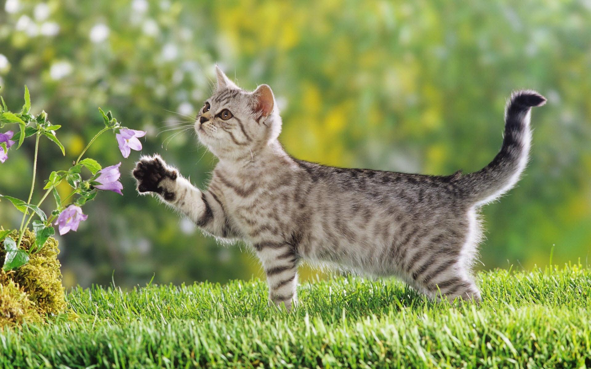 cute_kitten-1920x1200